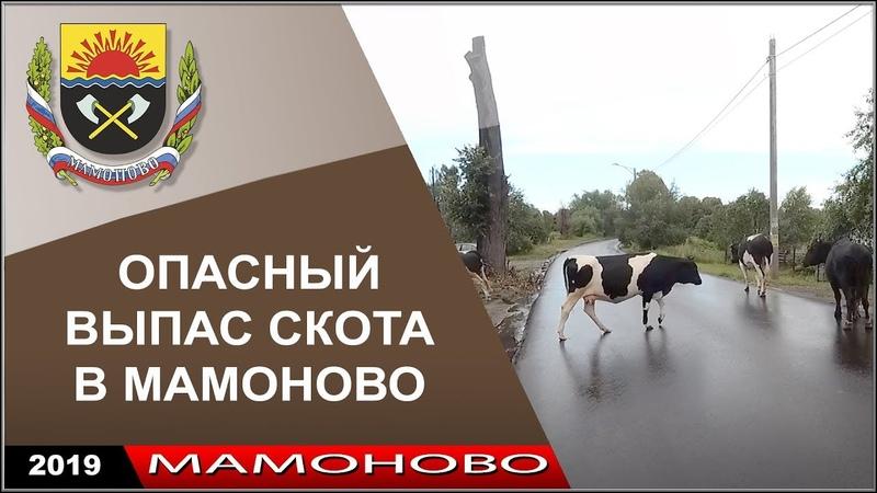 2019. Бесконтрольный выпас скота на ул Железнодорожной. (18)