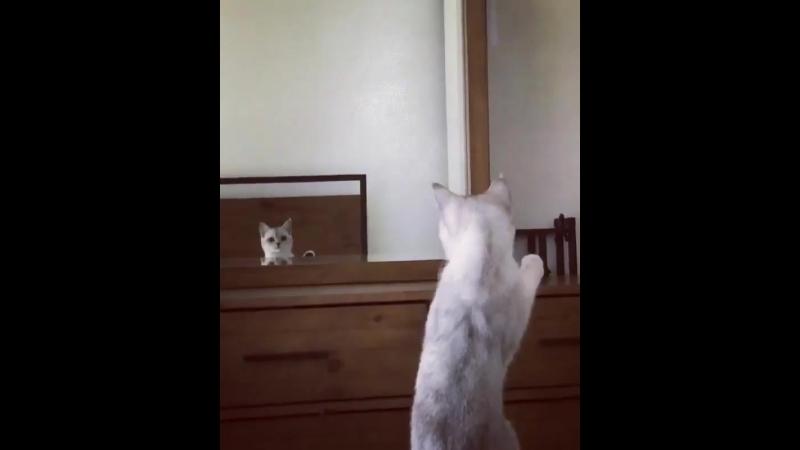 прихорашивается перед зеркалом - @mimothekitten.mp4