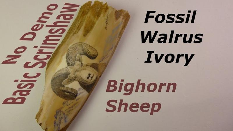 Scrimshaw Steps by Adams - Bighorn Sheep on Fossil Walrus Ivory