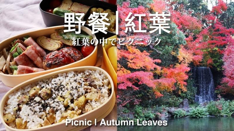 61 野餐,紅葉   紅葉の中でピクニック   Picnic Autumn Leaves