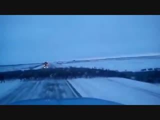 Трассу Норильск  Дудинка переходит огромное стадо северных оленей.