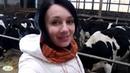 Как живется коровам зимой? КХ Михаила Шруба