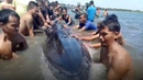 Endangered whale rescued from shallow waters by beachgoers