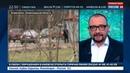 Новости на Россия 24 Вандалы украли деревья с мемориала погибшим в авиакатастрофе над Синаем