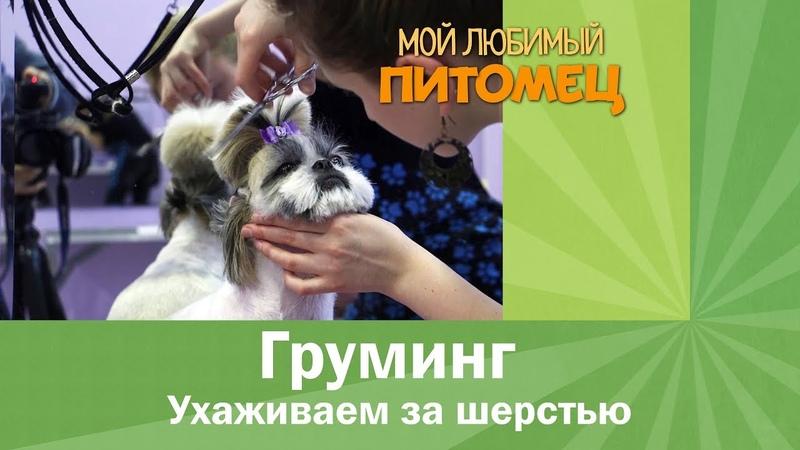 Как ухаживать за шерстью собак дома??