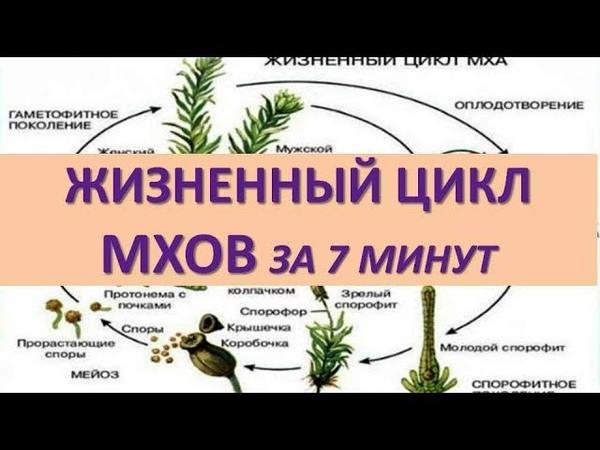 ЖИЗНЕННЫЙ ЦИКЛ МХОВ ЗА 7 МИНУТ ( задания из ЕГЭ)
