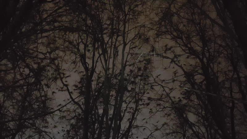 Весь сквер усыпан галками и воронами г Жуковский