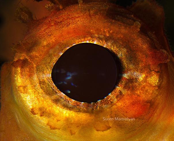 Глаза рыб и пресмыкающихся