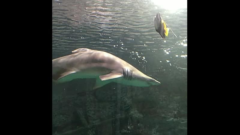 Воронеж. Океанариум. Вот это акула