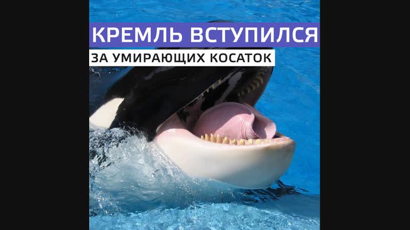 Новости из китовой тюрьмы в Приморье