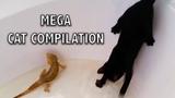 Ozzy Man Reviews MEGA CAT COMPILATION