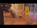 U knock knock mop bark bark