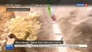 Новости на Россия 24 • День балтийского поля: жители Калининградской области провели аграрный фестиваль