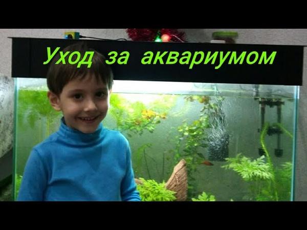 Еженедельный уход за аквариумом. Подмена воды в аквариуме. Как добиться чистой воды в аквариуме