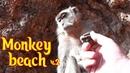 Monkey beach или как я ездил на пляж в Тайланде часть 2