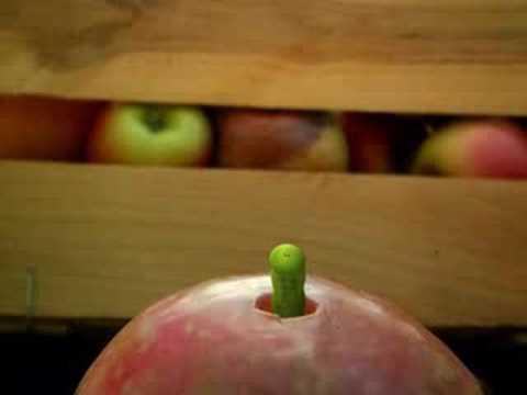 Minusculo - La manzana del amor