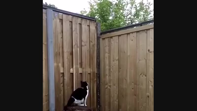 Keep your cat in your yard with this fence attachment