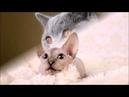 10 самых распространенных мифов о кошках Интересное о кошках