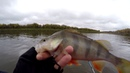 Easy Shiner от Keitech на рыбалке