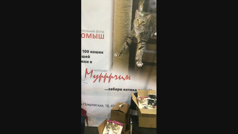 котокафе «Мурррчим» Нижний Новгород — Live