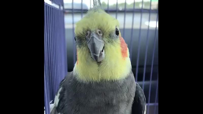Страна Попугов
