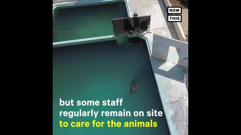 Этого дельфина бросили в аквариуме одного Похоже, владелец не собирается его отпускать на волю!