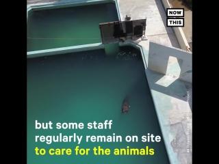 Этого дельфина бросили в аквариуме одного ?? Похоже, владелец не собирается его отпускать на волю!