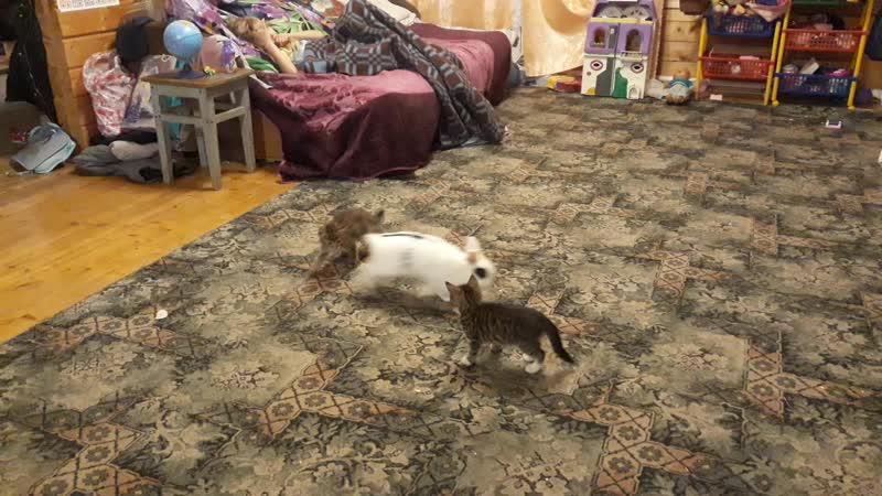 что за странный кот...
