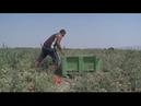 Modern-day slaves: Europe's fruit pickers