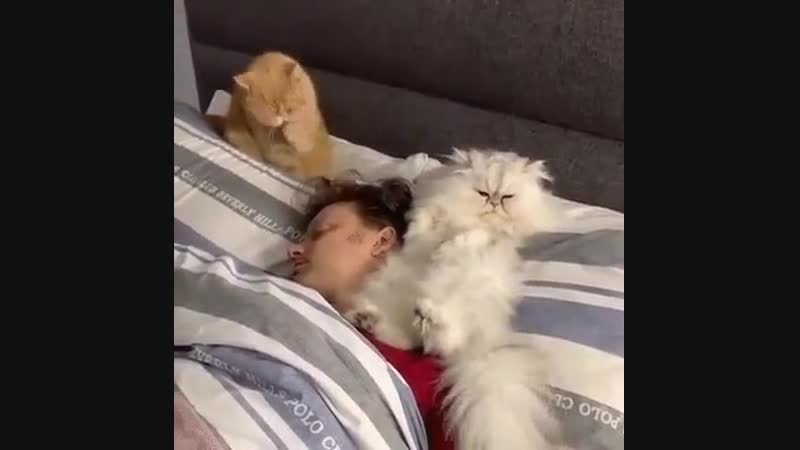 Ох, рано встаёт охрана!