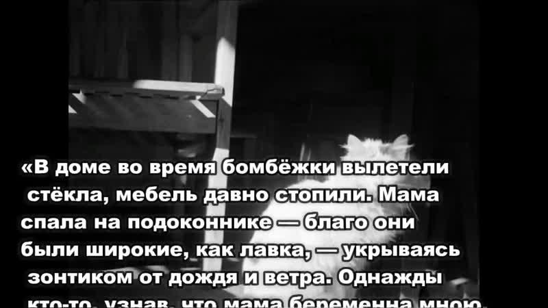 Коты блокадного Ленинграда- Вот кто спасал людей в голодные годы