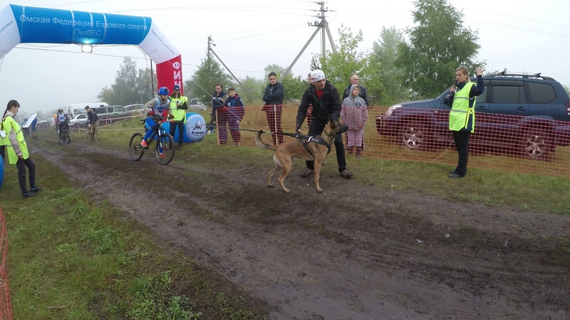 2018 Омск байкджоринг ездовой спорт
