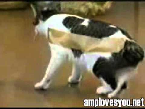 Что будет если к коту приклеить скотч