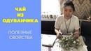Чай из одуванчика | Полезные свойства чая из одуванчика