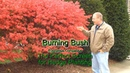 Burning Bush Euonymus - Fast Growing Hedge Plant