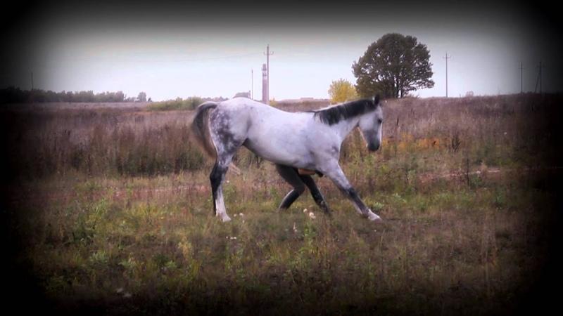 Гром и Вероника - мягкое воспитание лошади