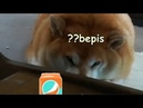 What happen when massive doggo drink bepis?
