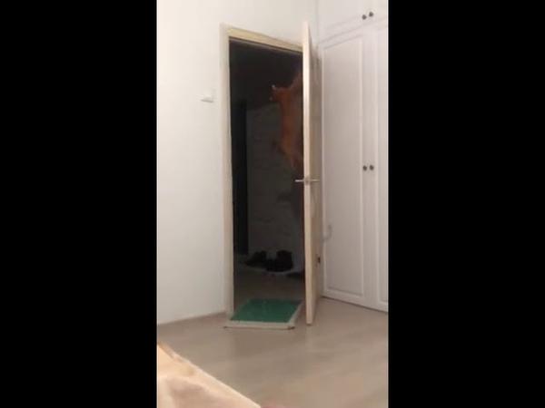 3457). 16.06.2018 - Котик Валдис уехал домой! (видео из дома)