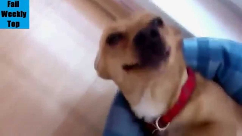 Dr. evil dog