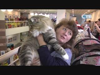 Выставка кошек в администрации