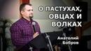 О пастухах, овцах и волках Анатолий Бобров