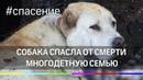 Собака спасла от смерти многодетную семью на Урале
