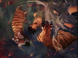 swimming with tigers