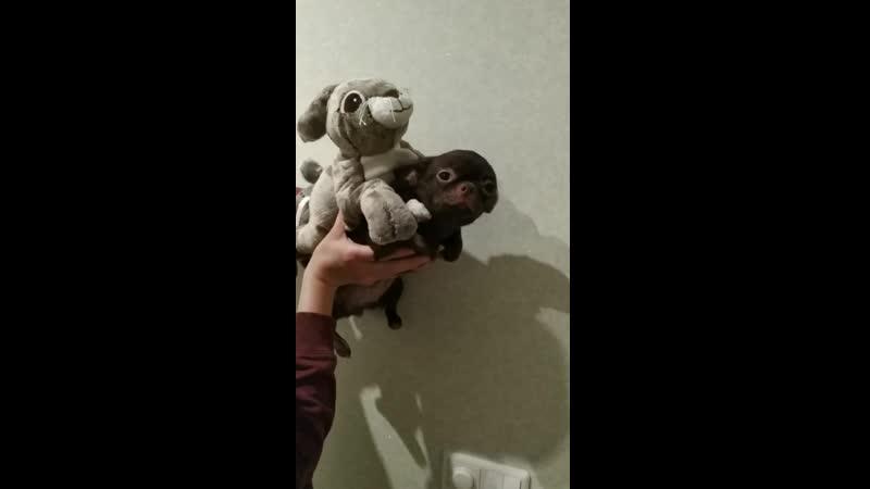 Бережная транспортировка кролика по воздуху