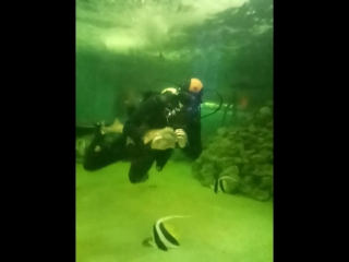 шоу аквалангиста и акул