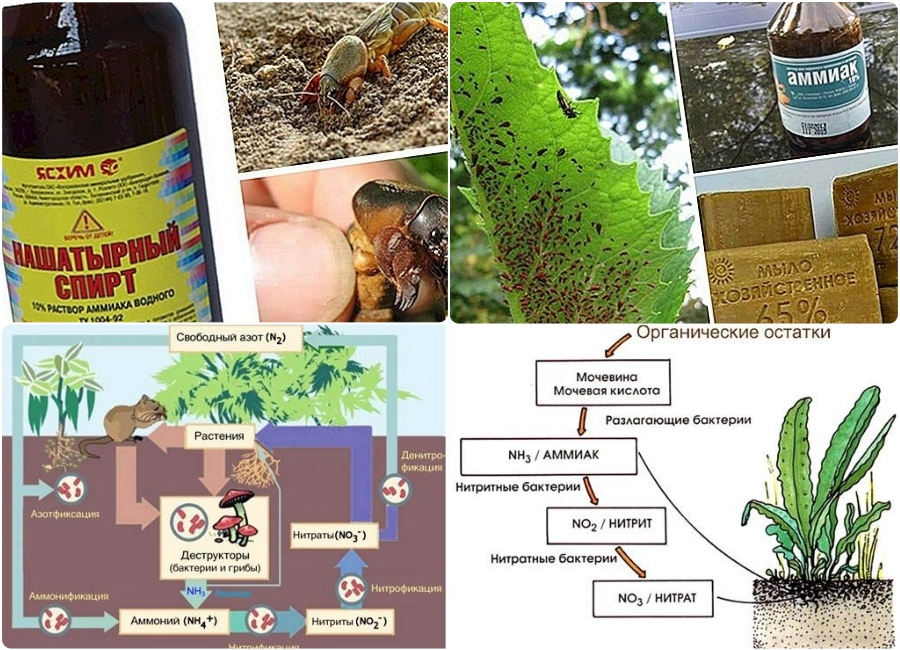 Нашатырный спирт — применение на растениях