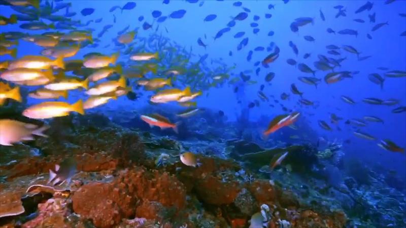 Мировой океан пластика