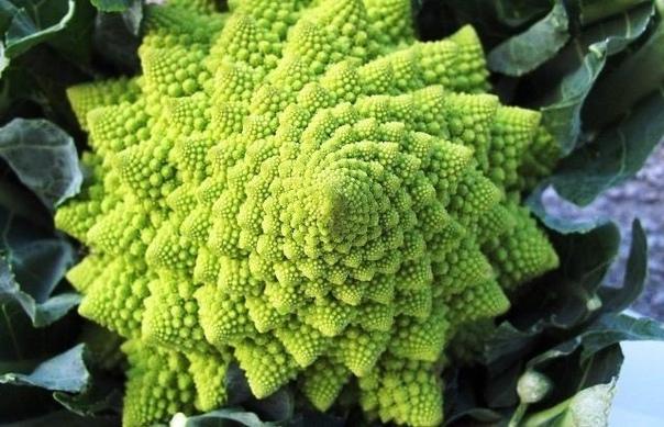 Почему капуста романеско  самый красивый овощ в мире