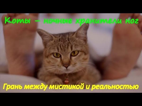 КОТЫ НОЧНЫЕ ХРАНИТЕЛИ НОГ Мистика и реальность CATS NIGHT THE KEEPERS LEGS