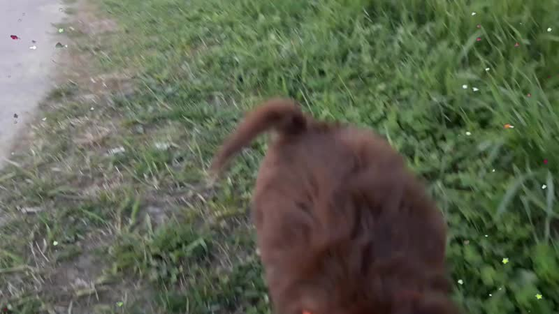 Алисия бежит